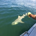 Matt S. catching Lemon Shark with awesome Capt. Chip