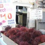 Sea urchins!