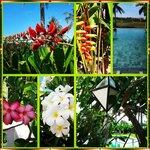 Plant life around resort