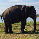 Safari sighting!