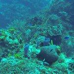 Diving @ Cozumel
