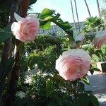 Beautiful roses everywhere you look!