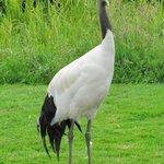 The elegant crane