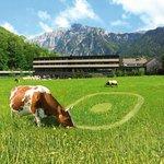 Nachbar's Kuh frißt unser Logo