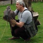 Owl & Falconry Centre