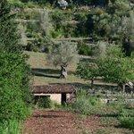 Blick auf die Olivenhaine