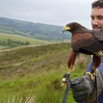 North Exmoor Hawk Walk
