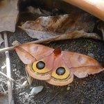 Lovely Moth
