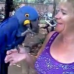 I love free flight bird sanctuary!