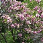 En park i fuld flor