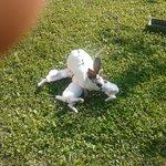 Mamma coniglia allatta i conglietti al mattino presto