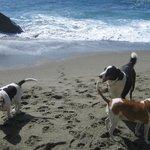 Baubeach, un MUST per chi ama il proprio cane !!
