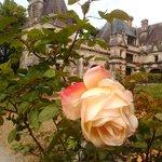 les roses brillent le château avec son jolie visage et son parfait odeur...