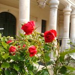 les fleurs caressé par le vent douce