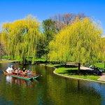 The Public Garden / Boston Common