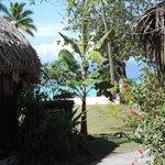 Vue des bungalows jardin