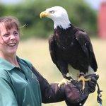 American Bald Eagle & Friend