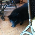 Black dog in the restaurant