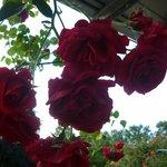 Красивые виды цветов
