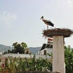Üst katlardan görünen leyleğimiz... - Stork from our upstair...