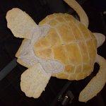 Hanging Turtle