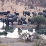 Herd of Elephants at the water hole below the hotel