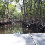 Airboat ride through the mangroves.