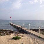 Shore diving Sea Fan Reef off the Cobalt Coast/Divetech dock... Awesome!