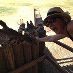 Loved feeding the Giraffes!