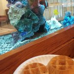 Breakfast waffles beside the fish tank