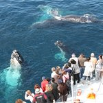 Whales around the boat!