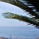 La palma sulla terrazza/solarium dell'Hotel Tigullio