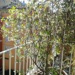Room balcony - scented jasmine