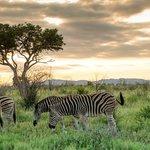 Zebra & Sunset