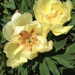 Garden Flowers at Summer Lodge Devon