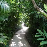 Path to our villa