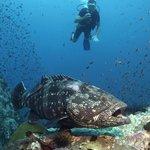 Diving Chumphon Pinnacle