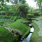 near the rice terraces