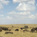 Mara Plains Camp - Out game viewing
