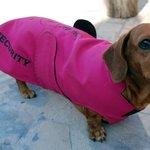 Trixie - Guard Dog