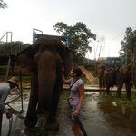 Можно покататься на слонах