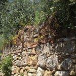 просто стена с растительностью