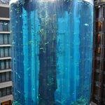 l'aquarium de l'hotel