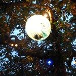 bulle de lumiere sous le magnifique cerisier