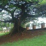uma bela árvore