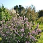 Mediterranean Botanical Garden and Coastal Biotope