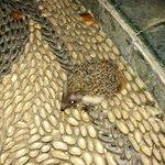 Hedgehog :) in the garden