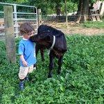 Calf Love