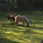 The horses outside our window.