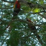 We saw many beautiful macaws on the bird watching tour.